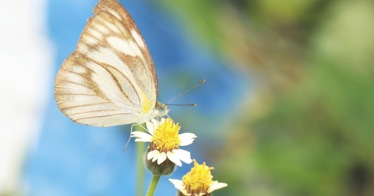 Continuing Professional Development (CPD)                                                     - 